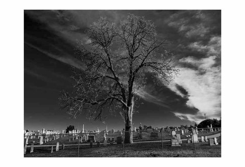 BW photograph of an old tree towering over a cemetary