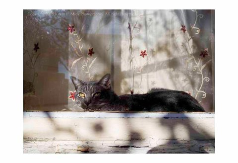 Cat laying on a windowsill appearing to be enjoying the sun