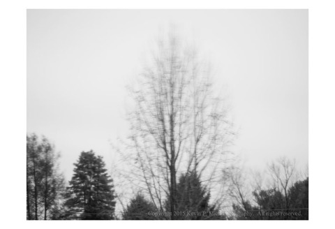 BW photograph of trees blowing in the wind