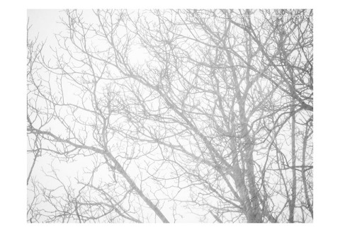 BW photograph of a tree in a snowstorm