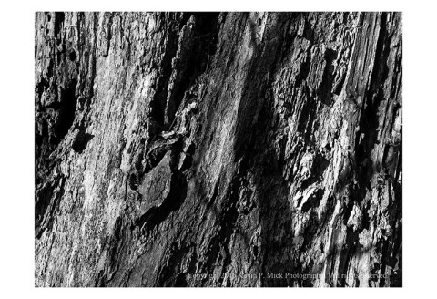BW photograph of a tree trunk that is decaying