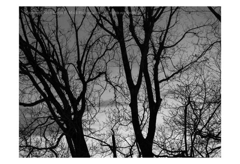 BW photograph of silhouetted trees at twilight.