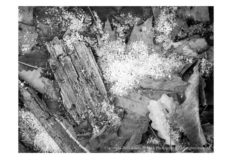 BW photograph of snow pellets laying on leaves and downed wood-April 2016.