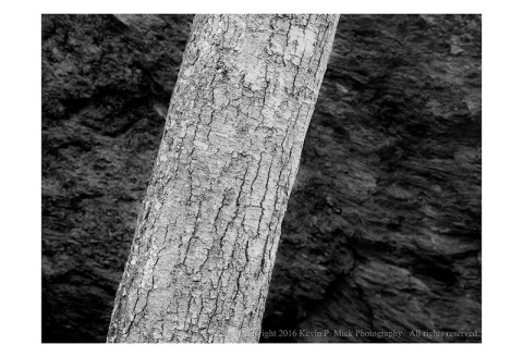 BW photograph of a section of tree trunk.