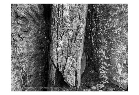 BW photograph of rock verticals and vine.