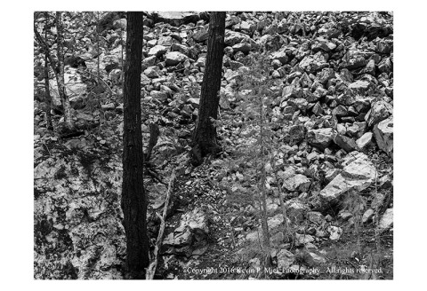 BW photograph of charred pine tree trunks along a rocky mountainside.