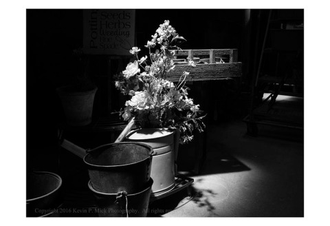 BW photograph of a top-lit bunch of flowers.