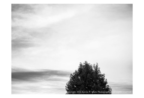 BW photograph of the top of a tree with a mostly overcast sky as the background.
