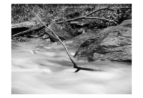 BW photograph of a branch swaying in Morgan Run.