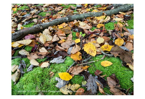 Various fallen leaves in autumn colours.