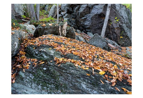 Fallen autumn leaves atop the rocks at Morgan Run.