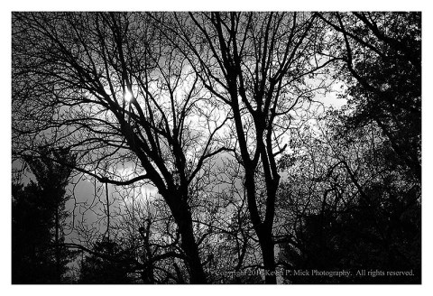 BW photograph of silhouetted trees with a strom brewing in the background.