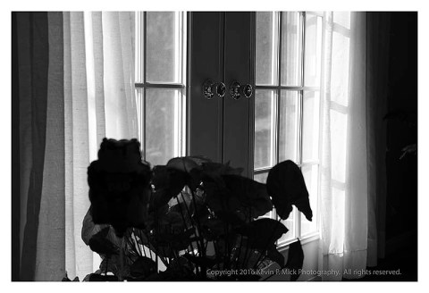 BW photograph of backlighted French Doors.