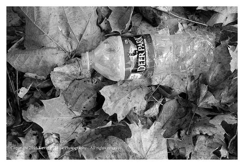 BW photograph of a water bottle laying atop dried autumn leaves.