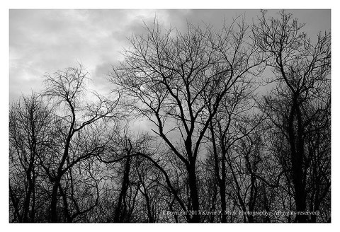 BW photograph of silhouetted trees with a partially rain clouded sky in the background.