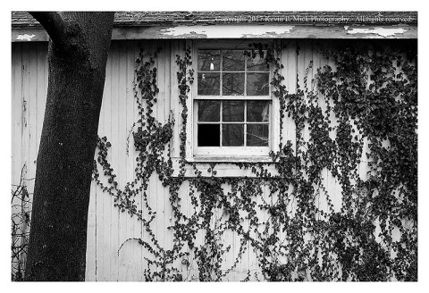 BW photograph of a tree in front of a building with a broken window and vines creeping up one side.