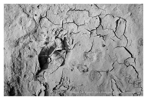 BW photograph of a dropped leave in dried, cracked mud.