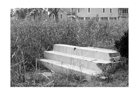 BW photograph of steps in an overgrown lot in New Orleans' 9th Ward.