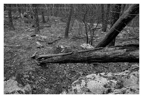 BW photograph of the Thurmont Vista Trail.