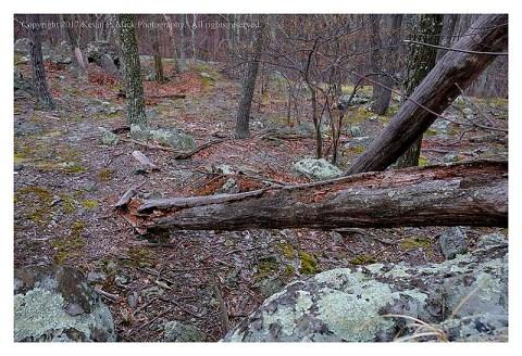 Colour photograph of the Thurmont Vista Trail.