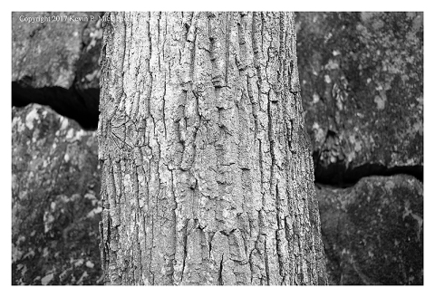 BW photograph of a section of tree trunk against some rocks with a large crack.