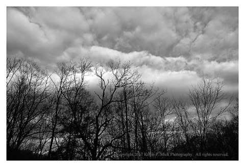 BW photograph of trees and clouds in the early morn.
