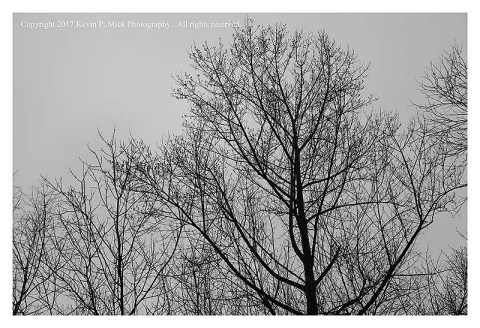BW photograph of trees against an overcast sky.