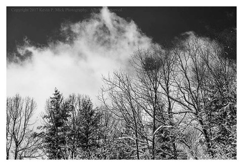 BW photograph of a large cloud above some trees after a snowstorm.