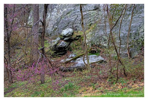 Colour photograph of Redbud tree and rocks in the rain at Morgan Run.
