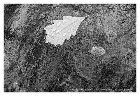 BW photograph of a leaf with water droplets laying upon a rock.