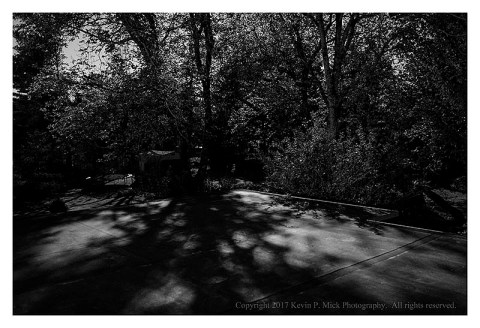 BW photograph of the moonlight shining through trees casting shadows on a roof.
