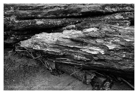 BW photograph of a broken log wedged against a rock at Morgan Run after a heavy rain.