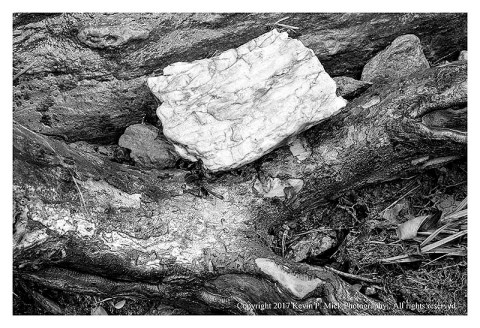 BW photograph of a larger rock resting on an exposed tree root after a storm.