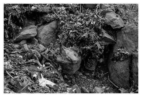 BW photograph of leaf debris from rain runoff.