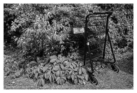 BW photograph of a shopping cart pushed into a bush.