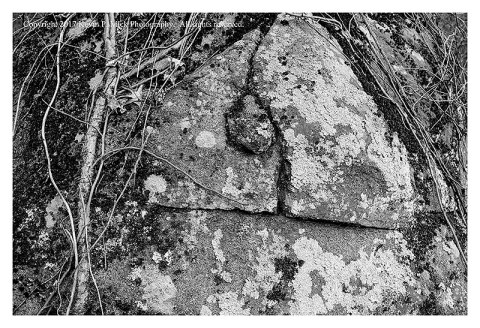 BW photograph of a large rock at Spangler's Spring with lichen and roots growing on its sides.