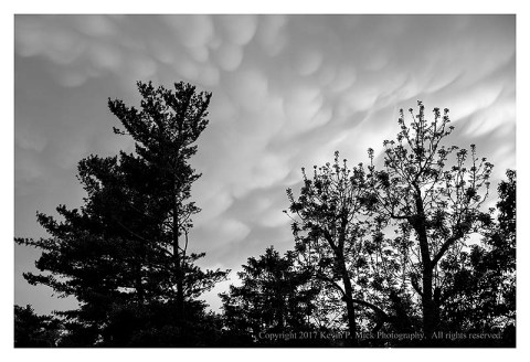 BW photograph of storm clouds between a stand of various trees.