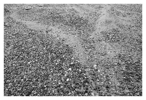 BW photograph of the pattern made in small pebbles by storm run-off.
