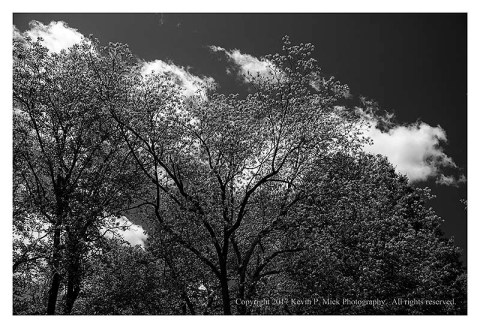 BW photograph of three trees and some clouds.