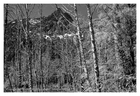 BW photograph of Big Four Mountain through a stand of trees.