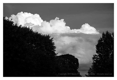 BW photograph of cumulous clouds behind a stand of trees.