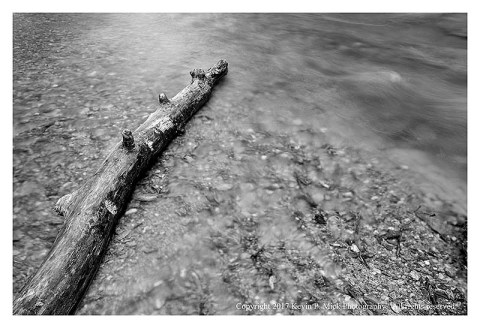 BW photograph of a fallen log upon a sandbar with running water.