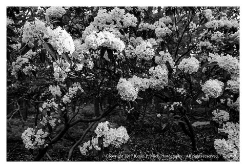 BW photograph of mountain flowers with strong sidelight.