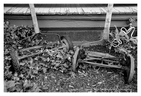 BW photograph of two old rotary movers overgrown with ivy.