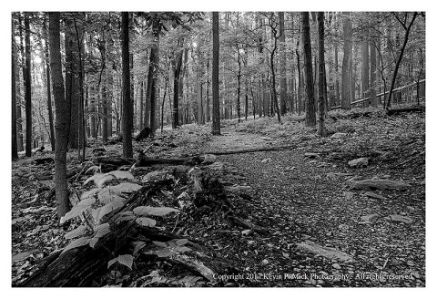 BW photograph of the Wolf Rock trail.