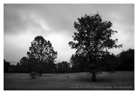 BW photograph of two trees during a rain.