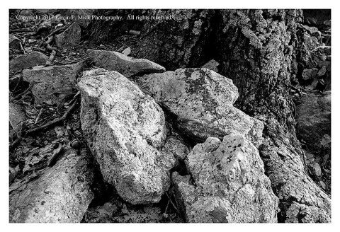 BW photograph of multiple rocks against a tree trunk.