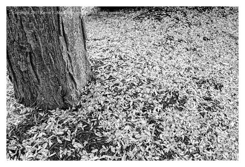 BW photograph of fall debris.