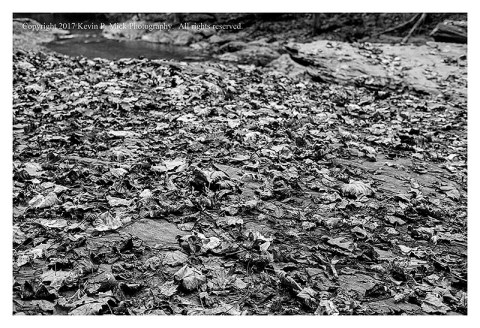 BW photograph of fallen leaves strewn about a large, flat rock.