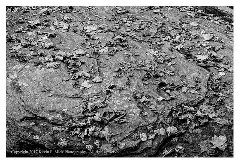 BW photograph of fallen leaves laying atop a rounded boulder.